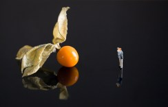 Peter - Physalis